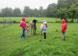 Kinder_mit_Alpakas